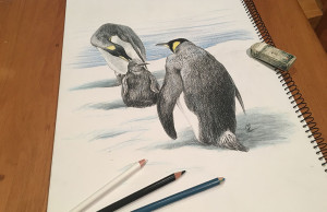 penguinDrawing